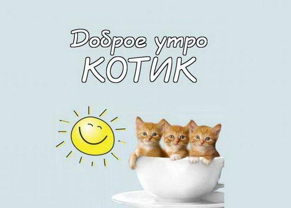 Доброе утро, котик