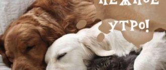 Картинка с животными и пожеланием доброго утра