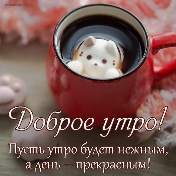 Кофе с рисунком котика на пенке