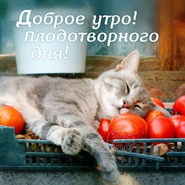 Кошка, которая спит