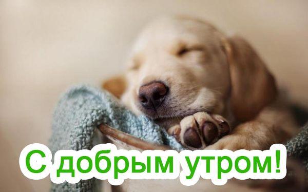 Милый щенок и пожелание доброго утра