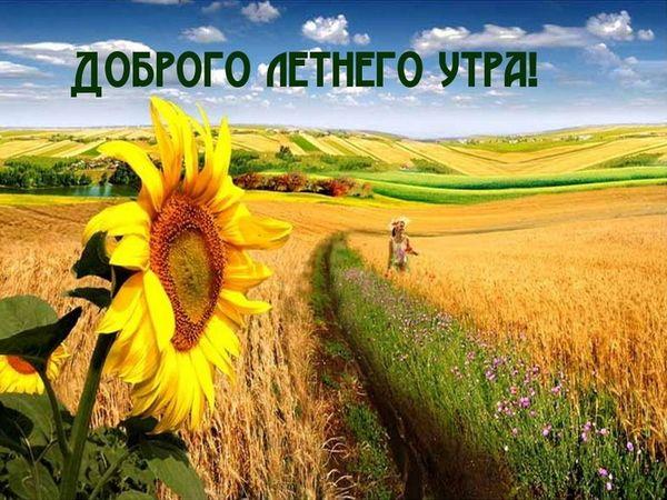 Подсолнух и поле в летний день