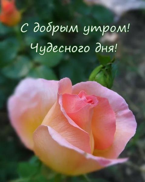 С добрым утром и чудесного дня