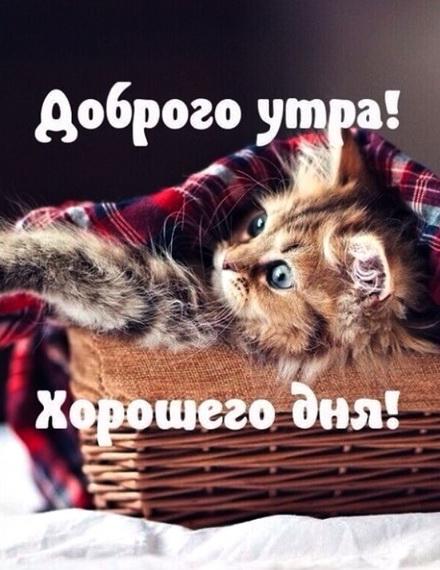 Котеночек в корзинке