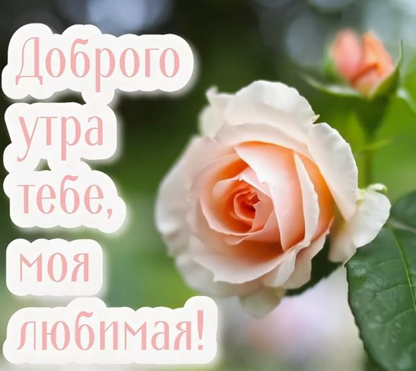 Розовая роза с утра любимой