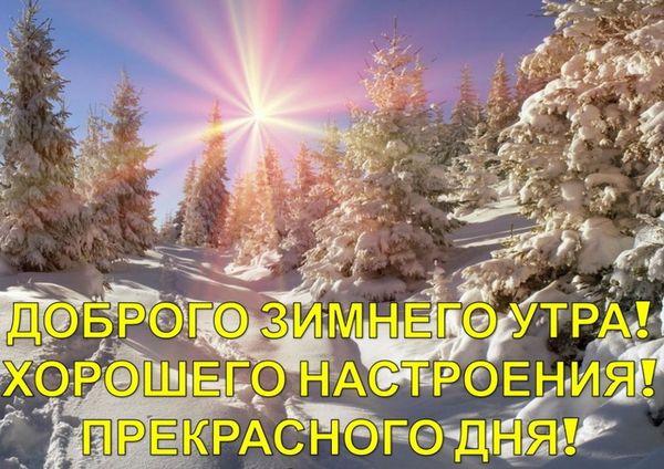 Картинка зимний лес и солнце