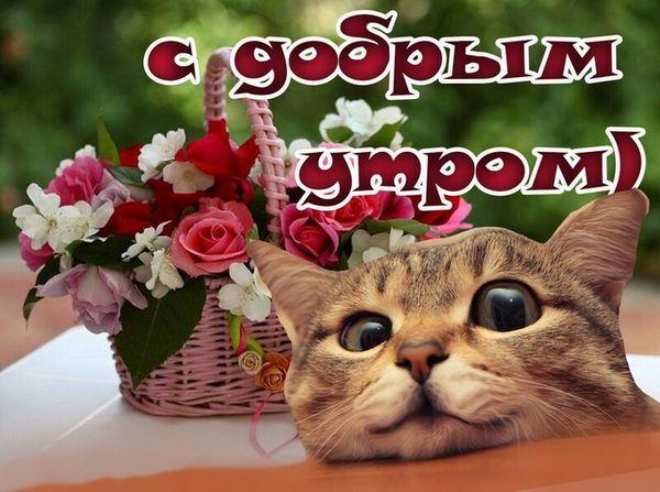 Прикольная картинка с котом и добрым утром