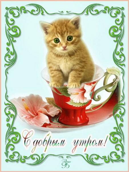 Открытка с котенком и пожеланием доброго утра