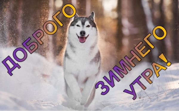 Собака и снег утром