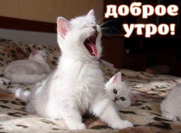 Котята только проснулись рано утром