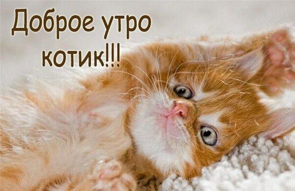 это или доброе утро мой котенок картинки сиськи, ну, лучше