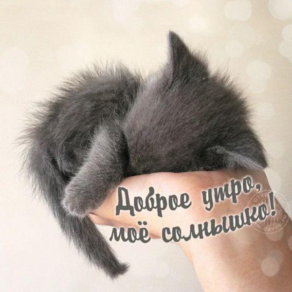 Спящий котенок на руке