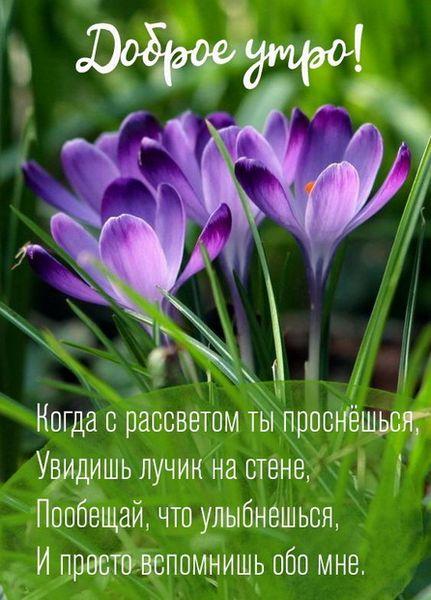 Цветы и трава ранним утром