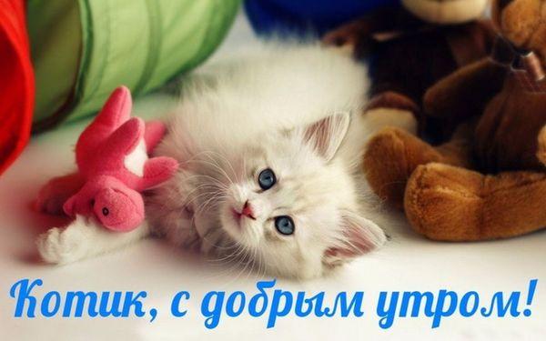 Котик, с добрым утром