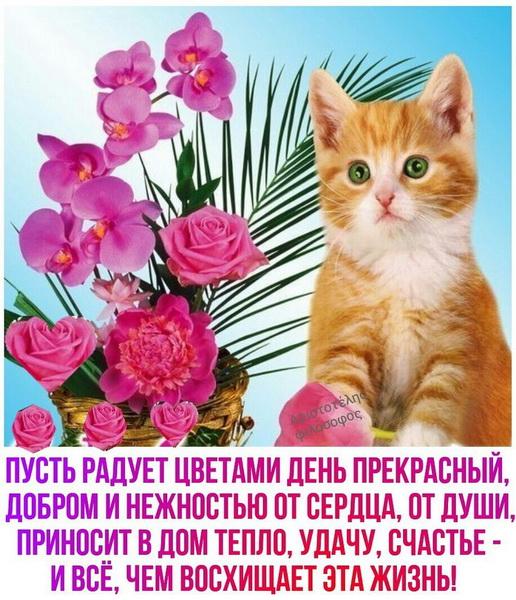 Картинка с котенком с пожеланием доброго утра