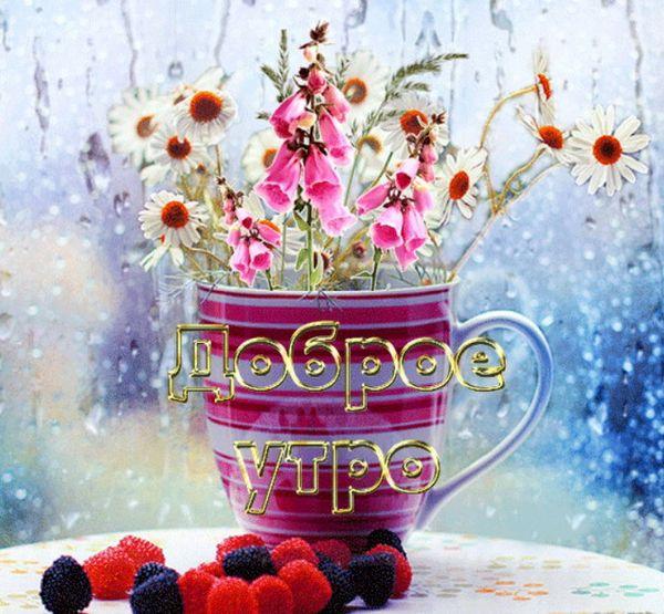 Цветы и ягоды ранним дождливым утром
