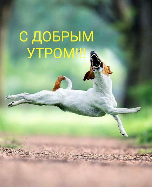 Картинка с собакой и надписью доброе утро