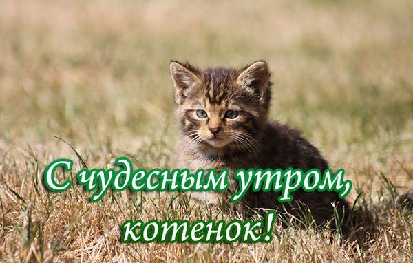 С чудесным утром, котенок