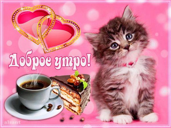 Милый котенок и чашечка кофе