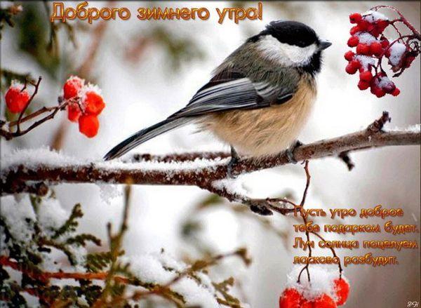 Пожелание с добрым зимним утром