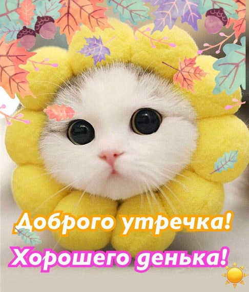 Котик в виде солнышка
