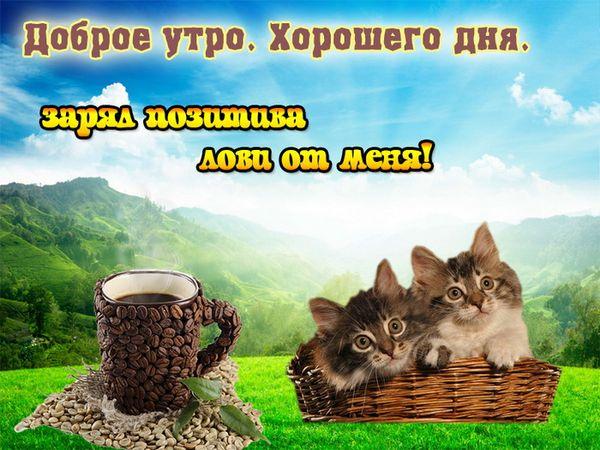 Позитивная картинка с кофе и котятами