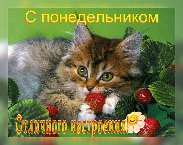 Красивая открытка с добрым утром понедельника