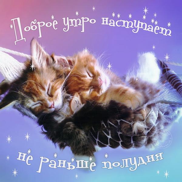 Милые котята в гамаке
