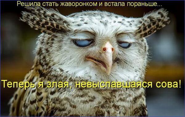 Злая и невыспавшаяся сова