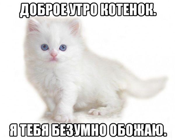 Картинка с котенком и пожеланием доброго утра
