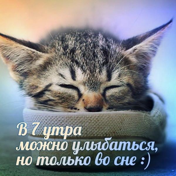 Прикольная открытка с котенком ранним утром