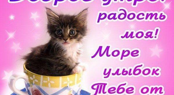 Доброе утро, радость моя