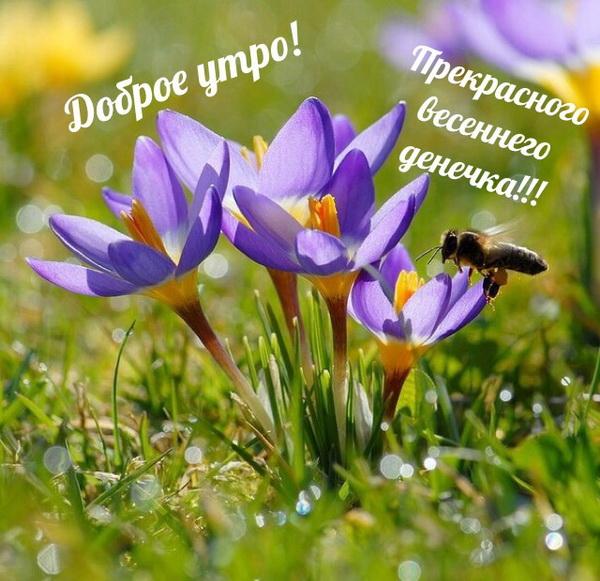 Прекрасного весеннего денечка