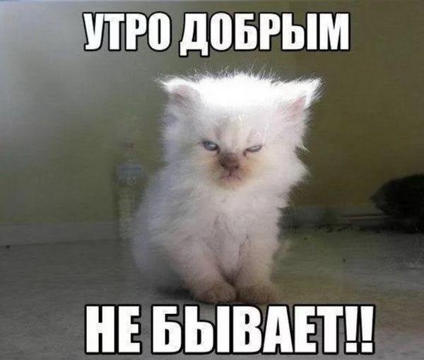 Невыспавшийся котенок
