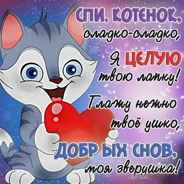 Пожелание спокойной ночи любимому котенку
