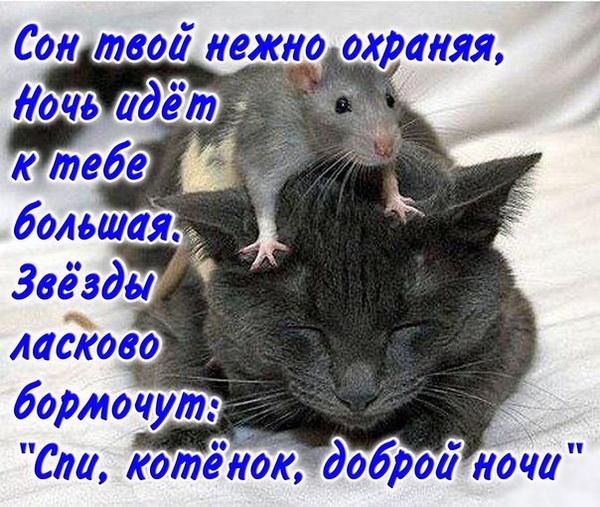Веселая картинка любимому котику с пожеланием спокойной ночи