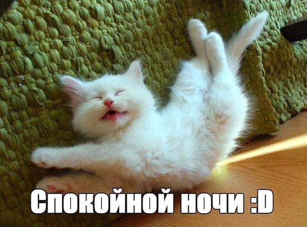Веселый котик желает спокойной ночи