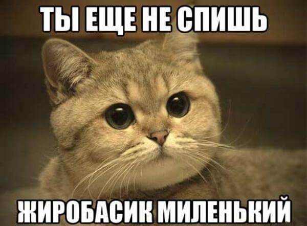 Котик хочет, чтобы ты шел спать
