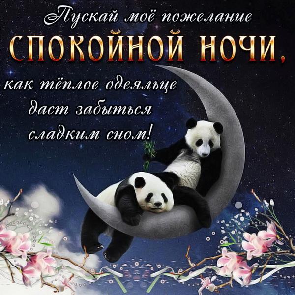 Милые панды желающие спокойной ночи
