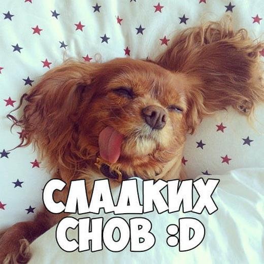 Смешная картинка любимому с пожеланием сладких снов