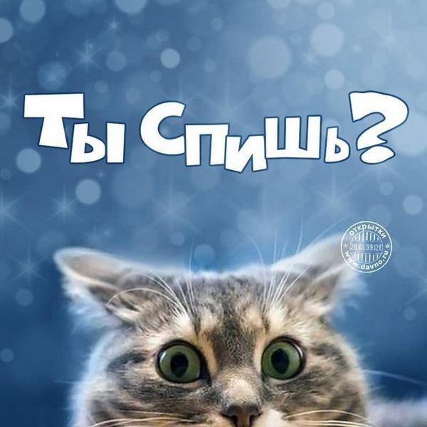 Котик спрашивает - ты спишь