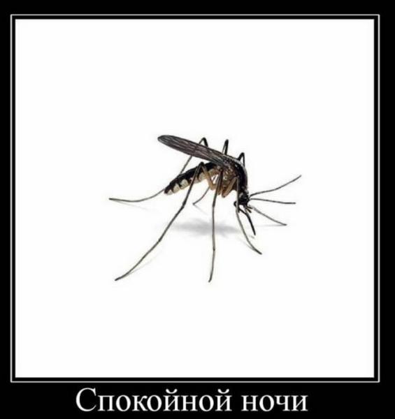 Комар желает сладких снов