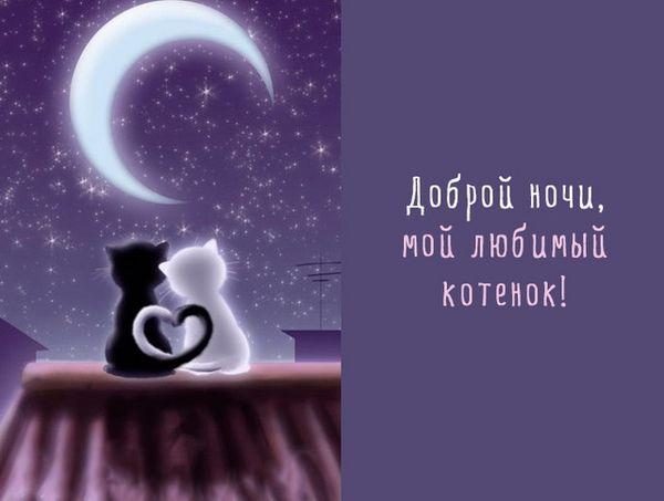 Доброй ночи, мой любимый котенок