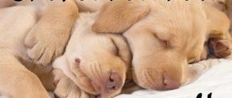 Спокойной ночи и сладких снов