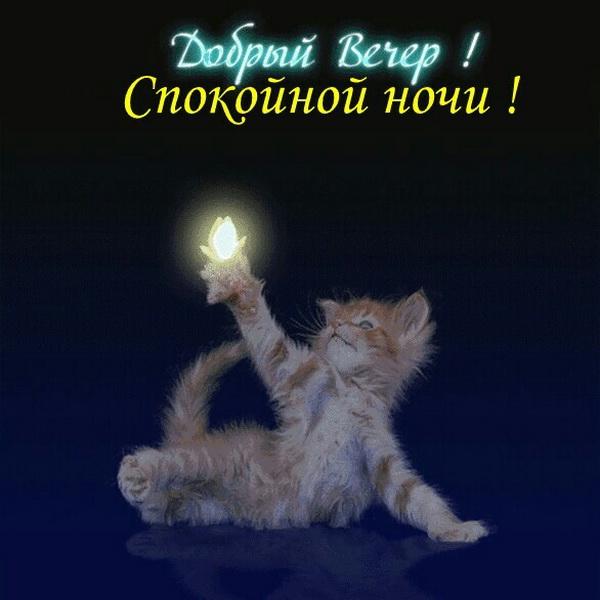 Доброго вечера и спокойной ночи